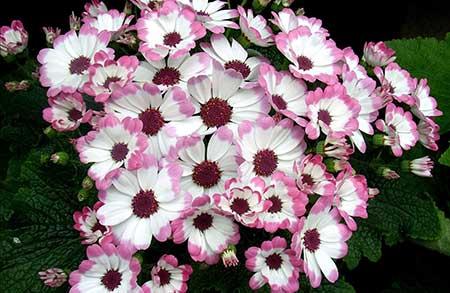fotos de flores rosas