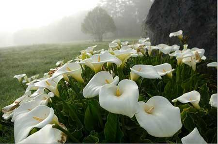 Papel de parede Flores imagens e fotos grátis  - WaLLDesK