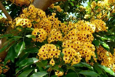 nomes e tipos de flores brasileiras