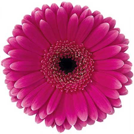 em cor rosa