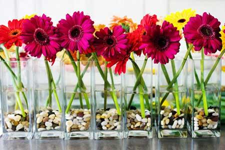 flor gérbera significados cultivo como plantar e cuidar