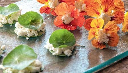 Fotos de flores comestíveis