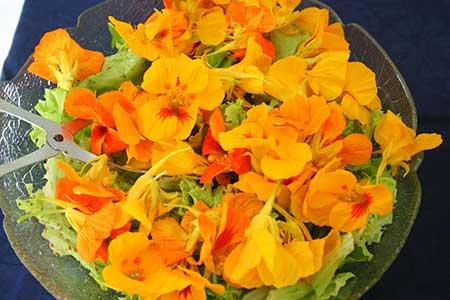 Dicas de flores comestíveis