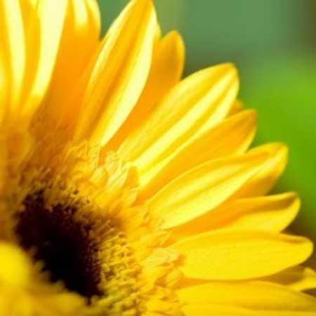 foto de flor bonita
