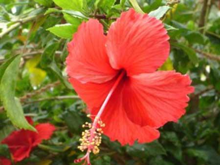 sugestões de flores comestíveis