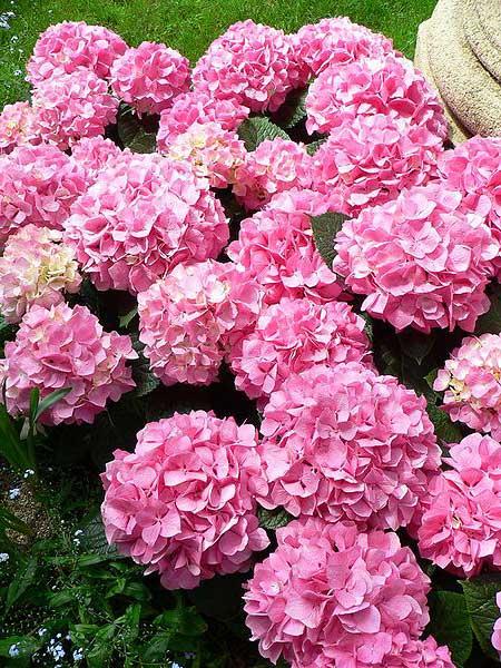 plantas jardim baratas:Flores Bonitas, Baratas e Fáceis de Cuidar para Jardim