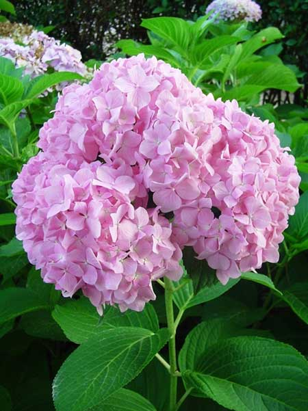 plantas jardim baratas:Ao conhecer opções de flores bonitas, portanto, é possível