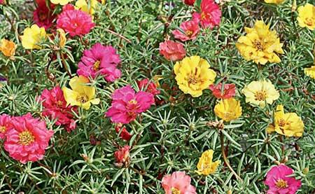 dicas de flores brasileiras