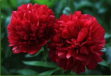 fotos de flores lindas