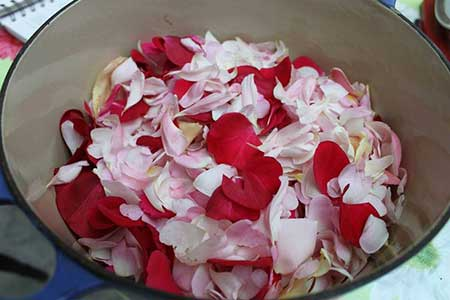 imagens de flores comestíveis