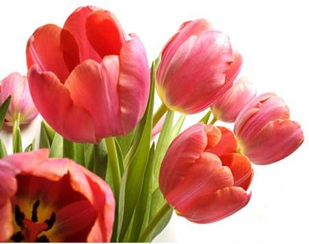 imagens de flores