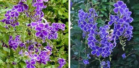 flores brasileiras
