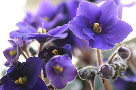 flores bonitas e perfeitas