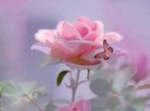 Flores Bonitas, Baratas e Fáceis de Cuidar para Jardim