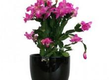 plantar flores em vaso