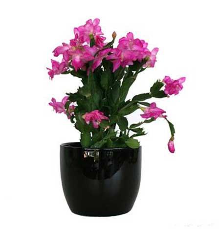 Fotos de vasos de flores naturais 66