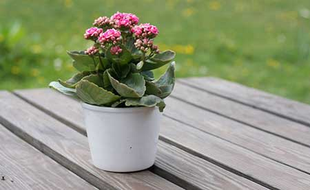 plantando em vasos