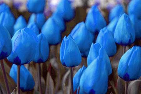 fotos de flores
