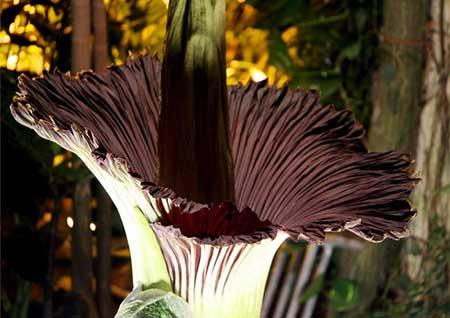 fotos da flor
