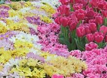 flor em inglês