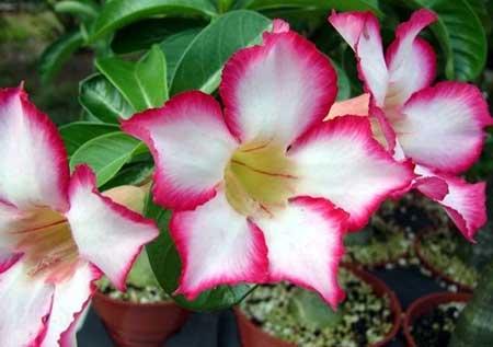imagens de flores lindas