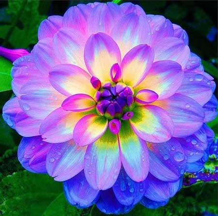 Resultado de imagem para imagem de flores lindas