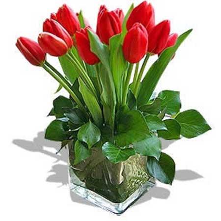 plantar em vaso