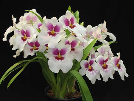 Fotos de Arranjo de Flores Naturais