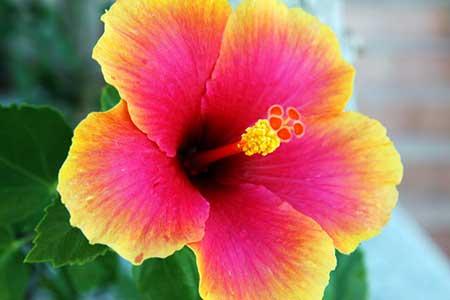 como falar flor em inglês