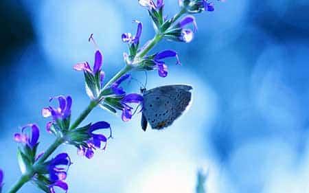 com borboleta