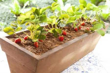 como cultivar no quintal