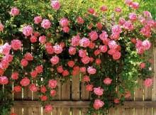 sugestões de jardinagem