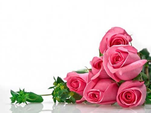 10 Dicas e Opc?es de Buques de Rosas e Significados