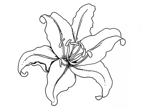 easy lily coloring pages - photo #9
