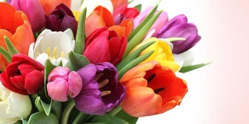 Resultado de imagem para flores Tulipas