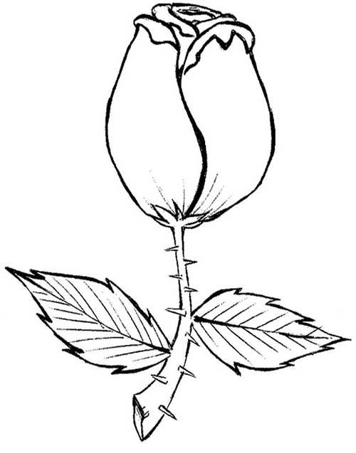 dicas de flores para pintar