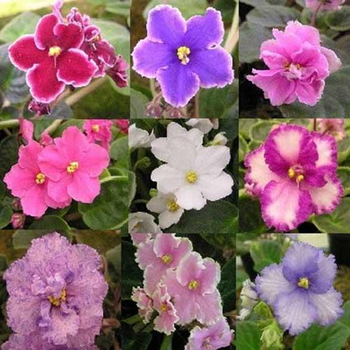 as várias cores da natureza