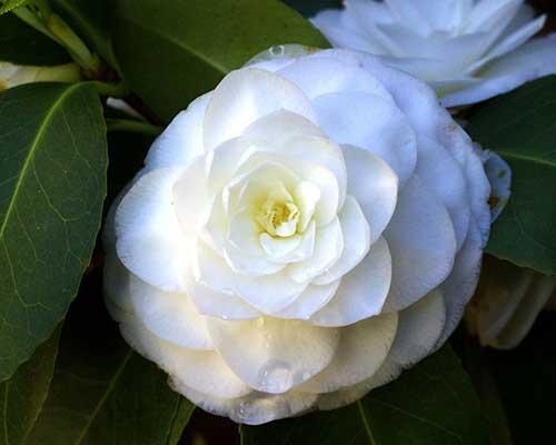 branco lindo