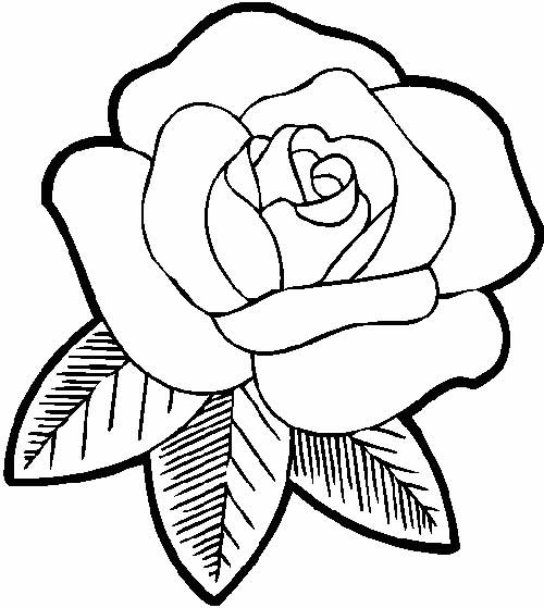rosa para colorir