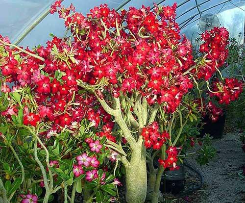 i love flores