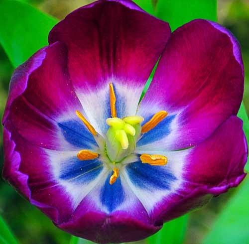 8 Flores Roxas Mais Lindas Da Natureza Nomes E Significados