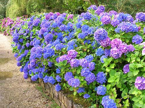 no jardim decorado