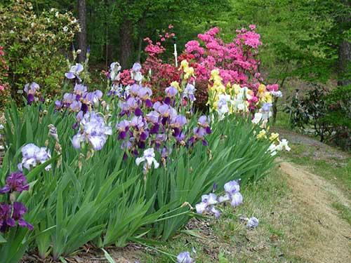 no jardim de casa