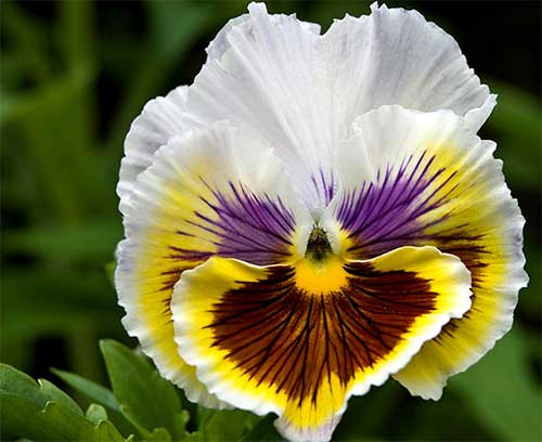 flores para jardins