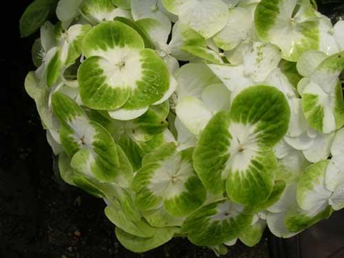 imagens de plantas verdes