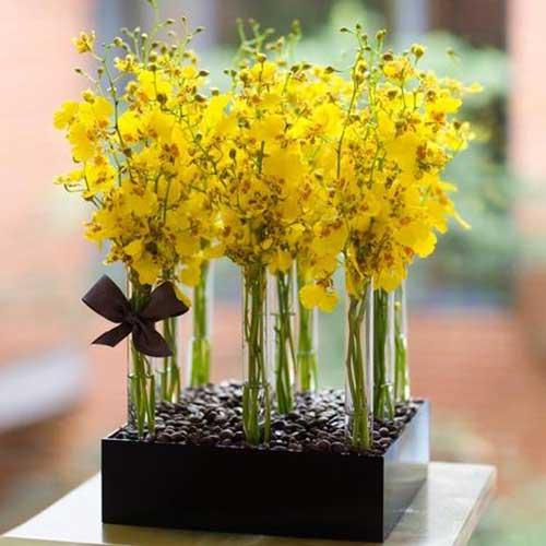 flores orientais