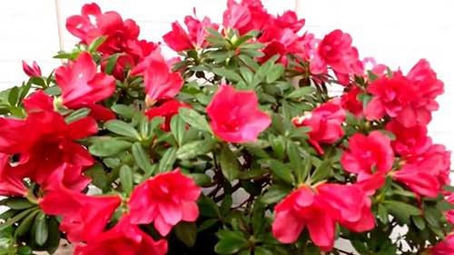 8 Flores Que Gostam De Sol Direto E Pouca água Para Vaso