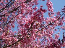 na árvore