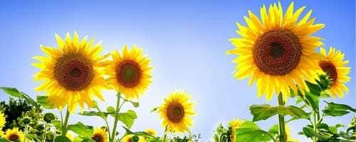 artigo completo para jardinistas