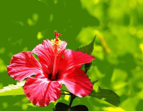 8 flores que gostam de sol direto e pouca gua para vaso - Tipos de flores silvestres ...